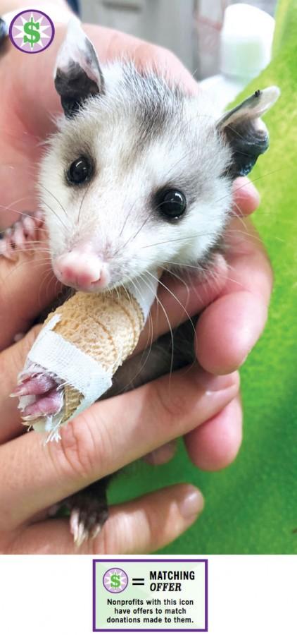 AWR-Give-Local-Possum